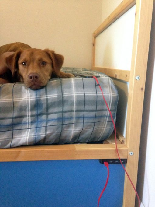 Now our dog Hunter can jump up into Alexander's bed, too!