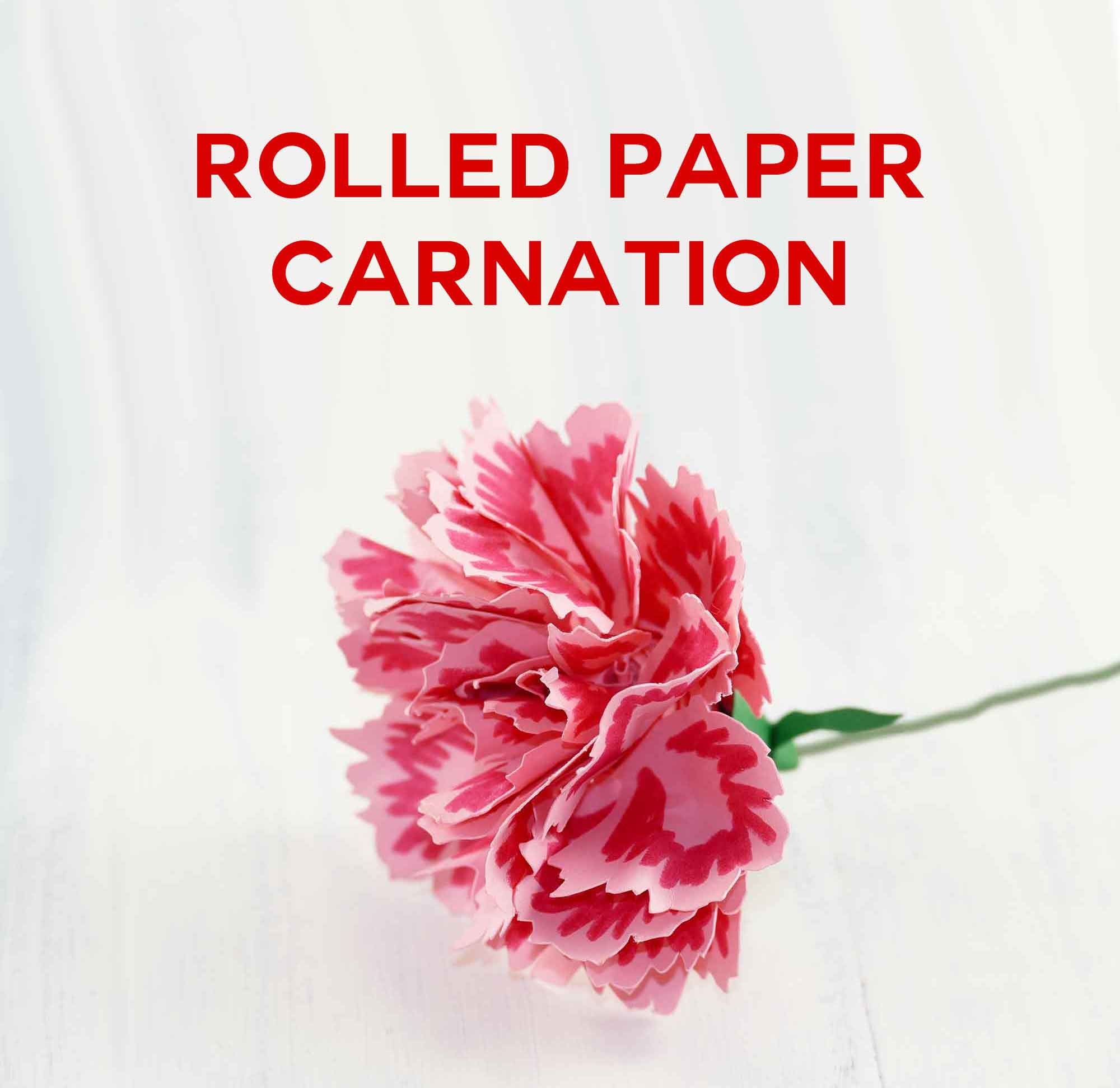 Rolled Paper Carnation Tutorial - Free SVG Files - Jennifer Maker