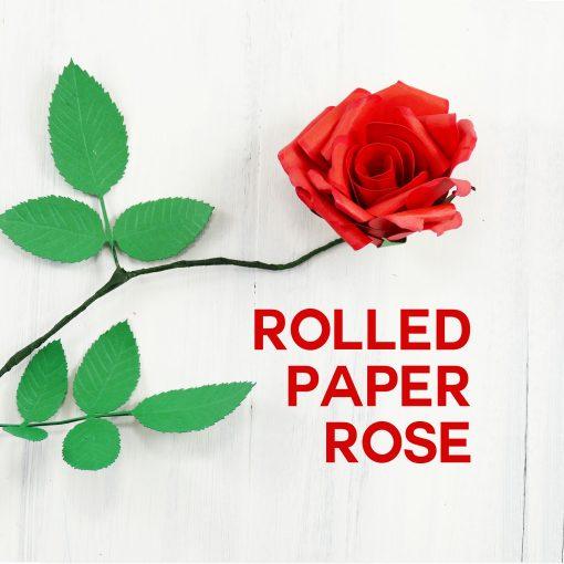 Rolled Paper Rose Flower | Quilled Flower | DIY Paper Flower
