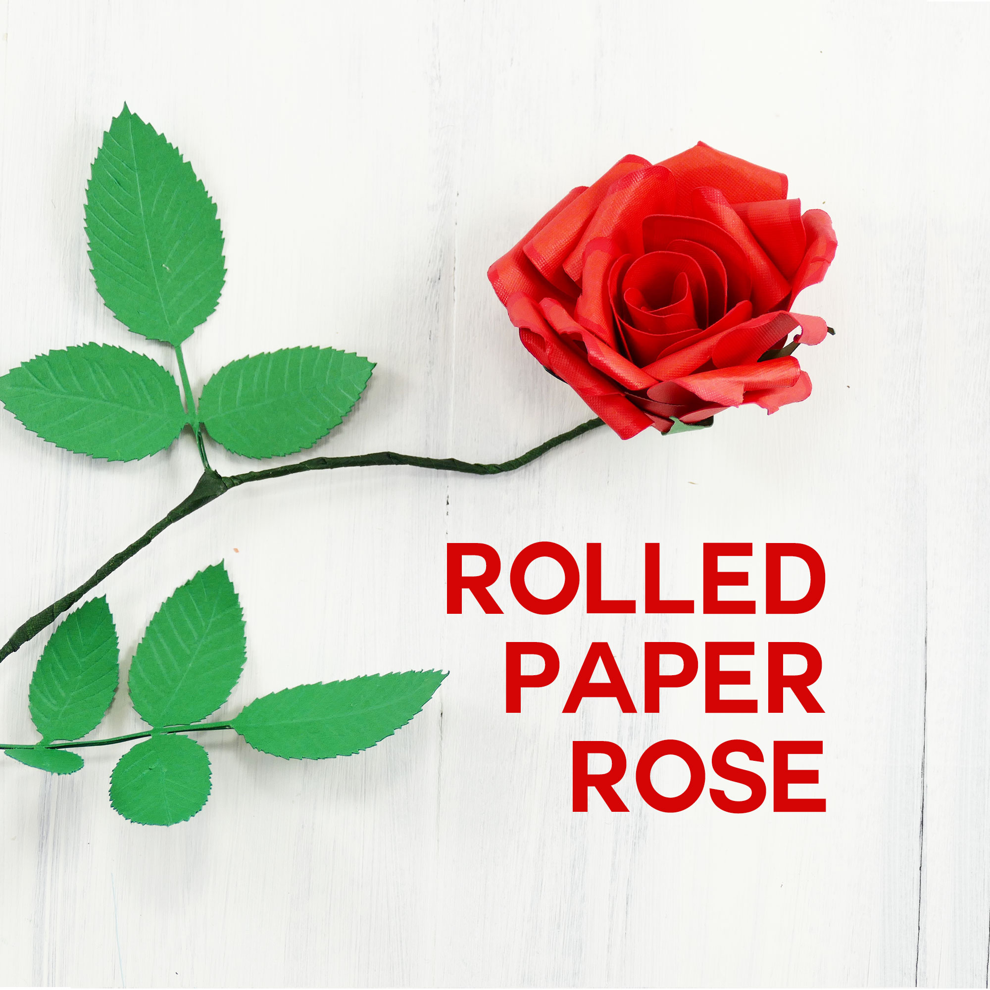 Rolled Paper Rose Tutorial Fun Realistic Jennifer Maker