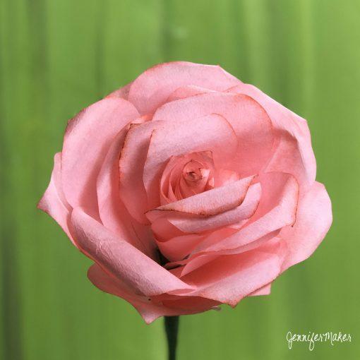 DIY Coffee Filter Rose | Dyed Paper Flower | Pink Rose