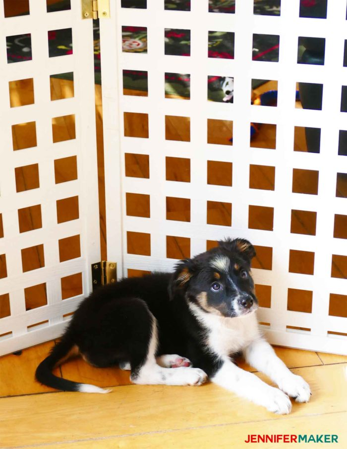 Puppy in front of our extra tall and extra wide DIY pet gate