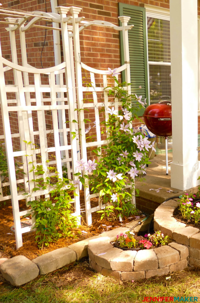 Jennifer's white arbor with clematis growing on it