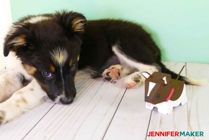 Paper puppy with real Border Collie puppy!