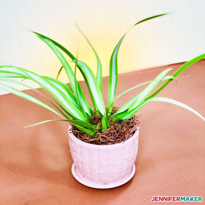 Pretty paper spider plant made from green cardstock!
