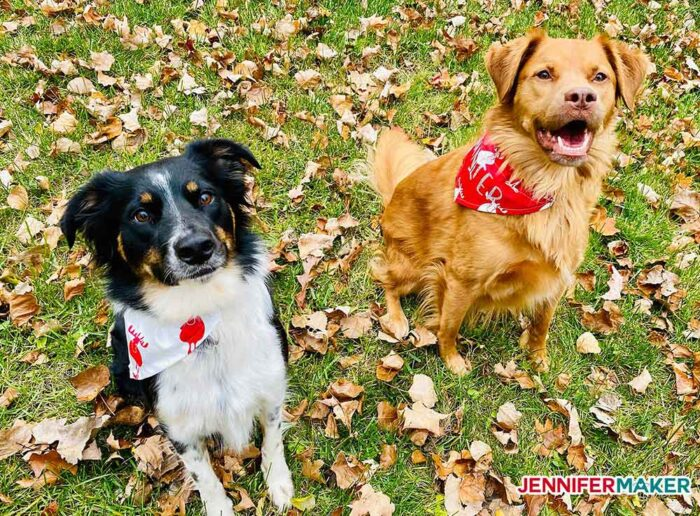 My two dogs wearing personalized pet bandanas in red and white cotton fabric